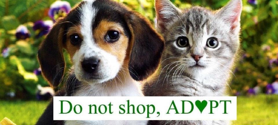 Do not shop adopt.jpg